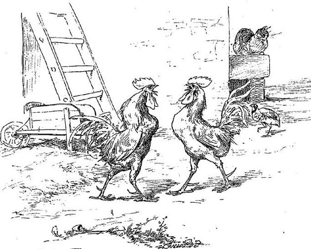 Куропатка и петухи