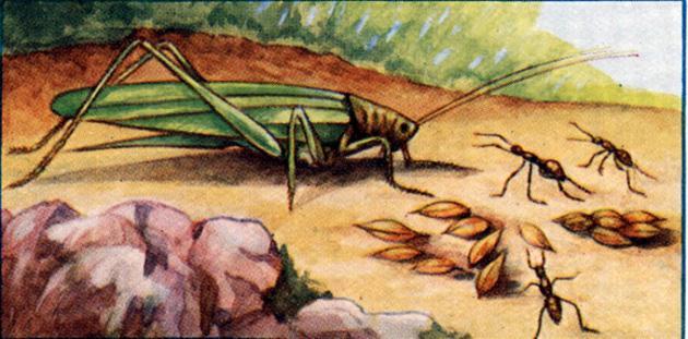 Кузнечик и муравьи