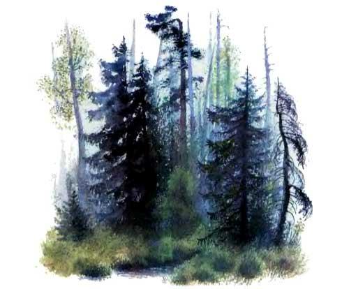 Лес и ручей
