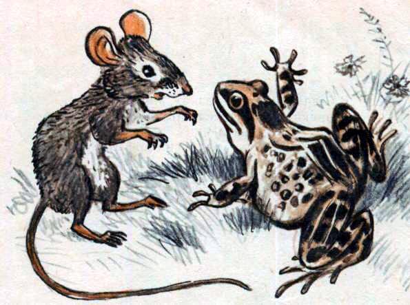 Лягушка, мышь и ястреб
