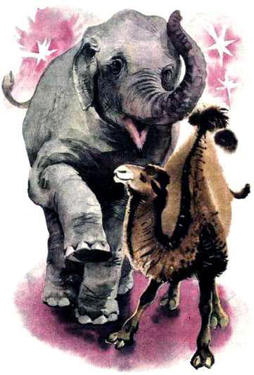 слон и верблюд