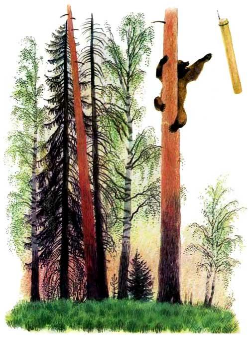 Медведь влез на дерево и бревно