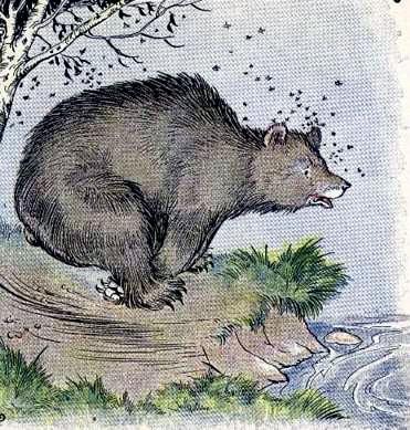 Медведь и пчелы