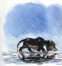 щенок, собака, пес, дождь, мокрый, пес