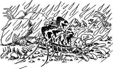 дождь и насекомые
