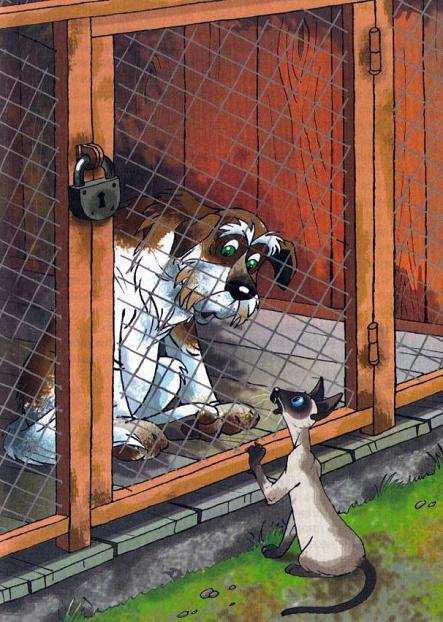 кот и пес за решеткой