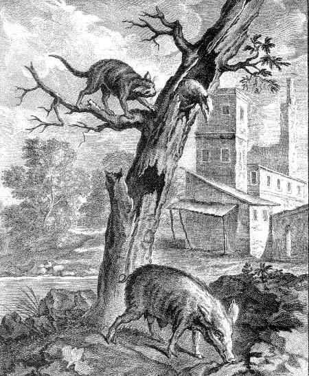 Орел, дикая свинья и кошка
