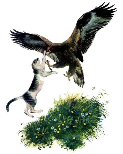 драка Орел и кошка