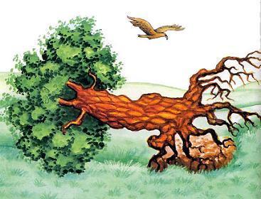 Орёл и упавшее дерево