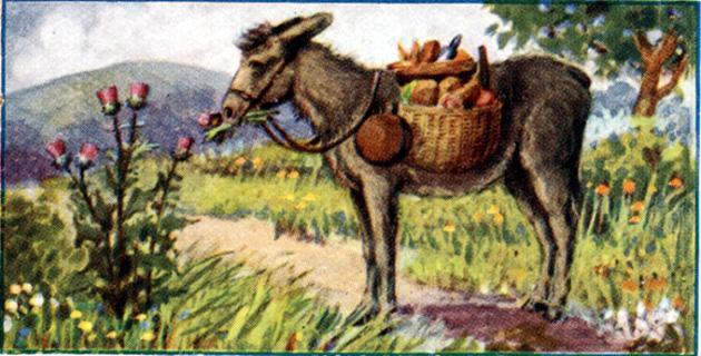 Ослы едят чертополох