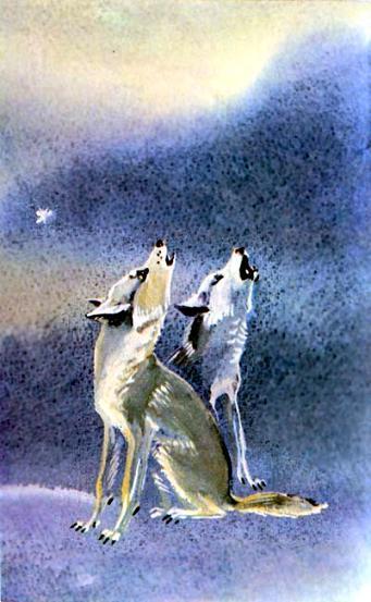Отчего волк на Луну воет