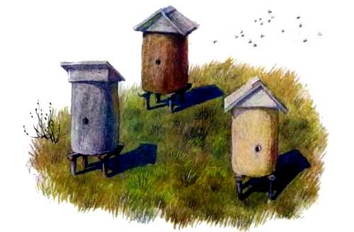 пасека улии Пчелки на разведках