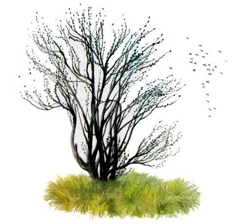 Пчелки и дерево