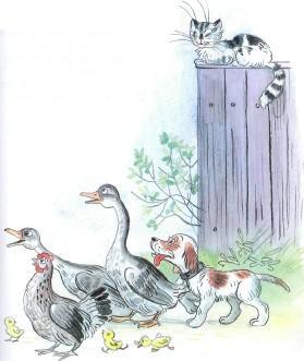 гуси курица собака кот во дворе
