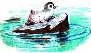 Пингвинёнок на льдине
