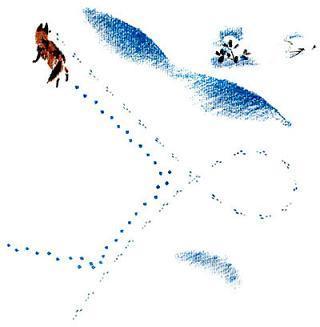 следы на снегу и лиса