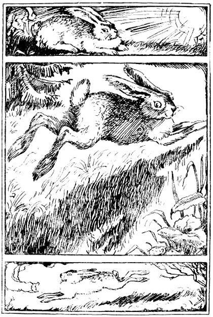 Почему заяц косой?