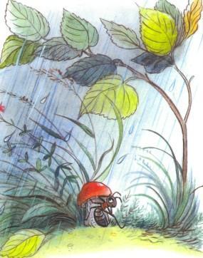 муравей под грибом дождь
