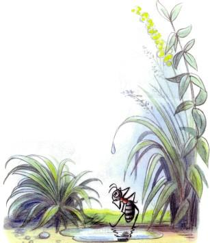 злой муравей в луже