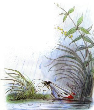 бабочка под дождем