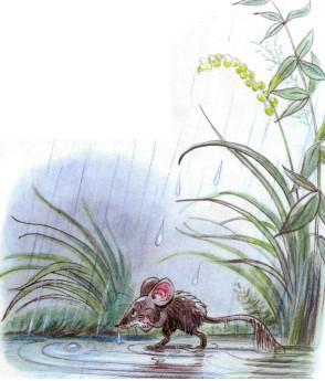 мышь мышонок мышка под дождем