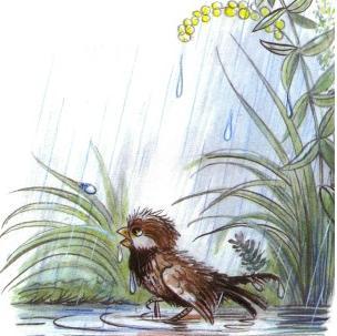 воробей под дождем