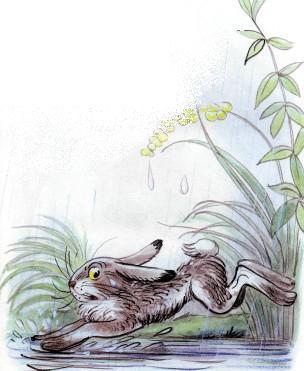 заяц под дождем