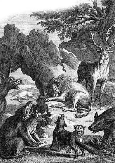 Похороны львицы