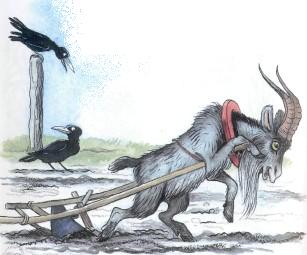 козел пашет плугом землю огород козла запрягли
