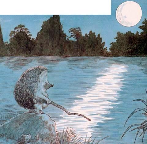 Ёжик ночью на берегу