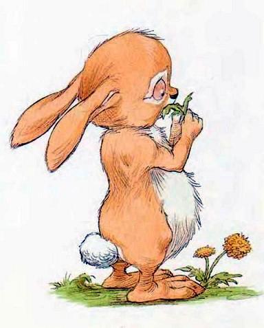 Кролик жует траву