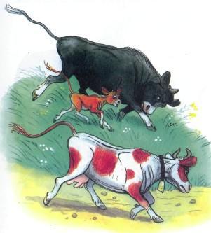 бык корова и теленок бегут
