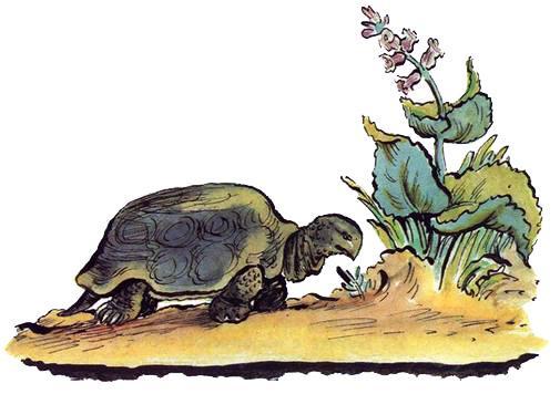 Панцирь носит черепаха
