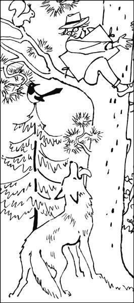 Хитрюшкин залез на дерево от волка