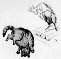 козел и кошка