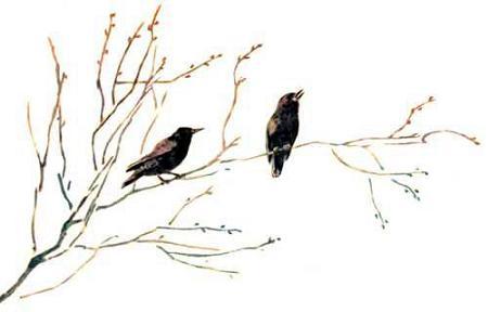 Птицы сидят на ветке