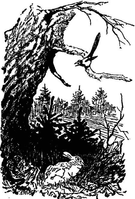 Разговор птиц и зверей