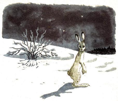 белый заяц на снегу