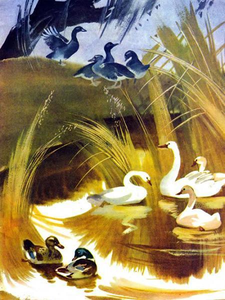 осень птицы в пруду