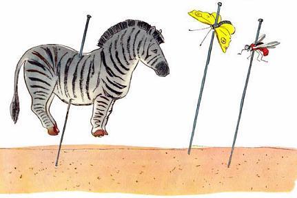 Назвали зебру насекомым