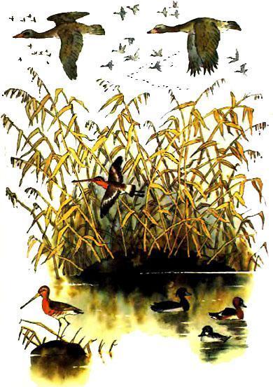 птицы над озером