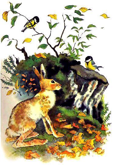 Синичка и заяц осенью