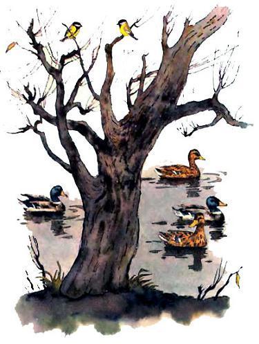 Синицы и утки