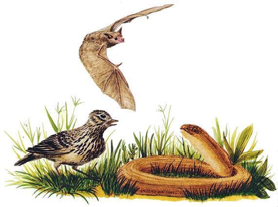 жаворонок и ящерица летучая мышь