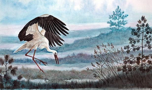 аист на озере охотится