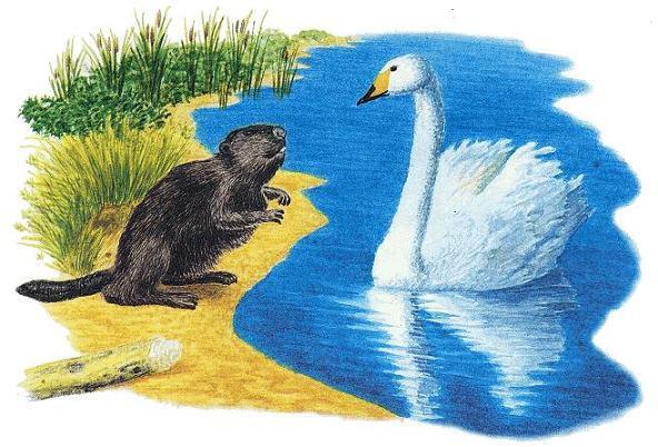 бобёр и лебедь на берегу
