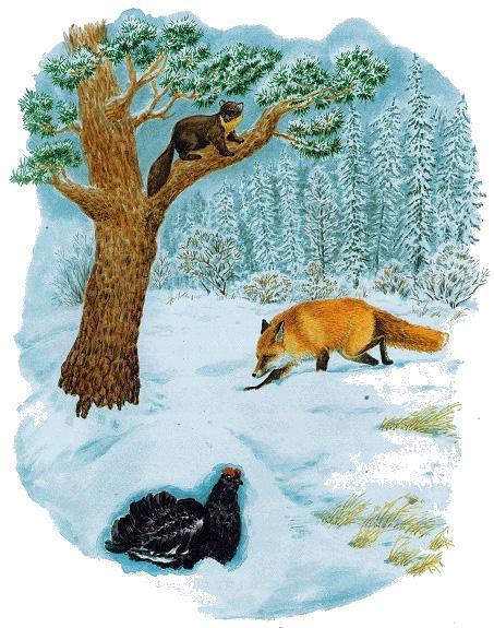 лиса идет по следу в зимнем лесу а тетерев спрятался