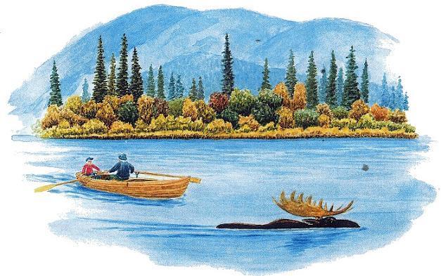 лось переплывает озеро реку