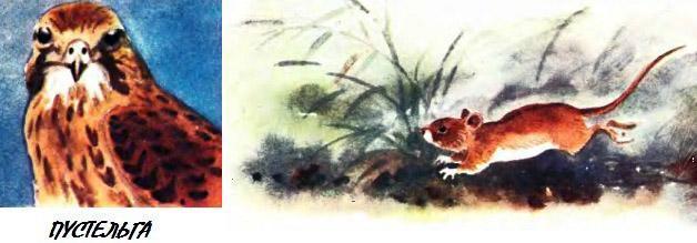 пустельга и мышь