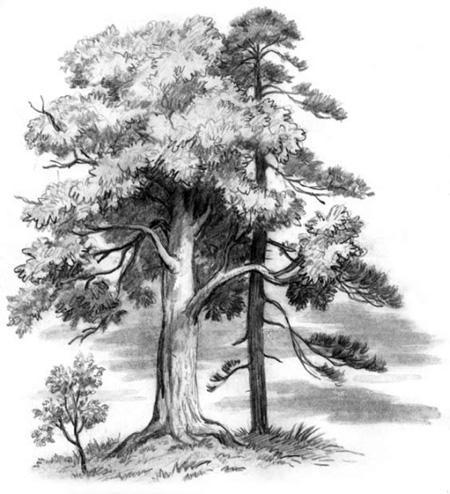 Спор деревьев